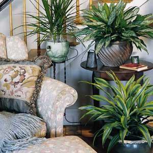 стайни растения - стрес