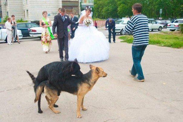 na svatba