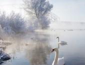 Icy Swan Lake