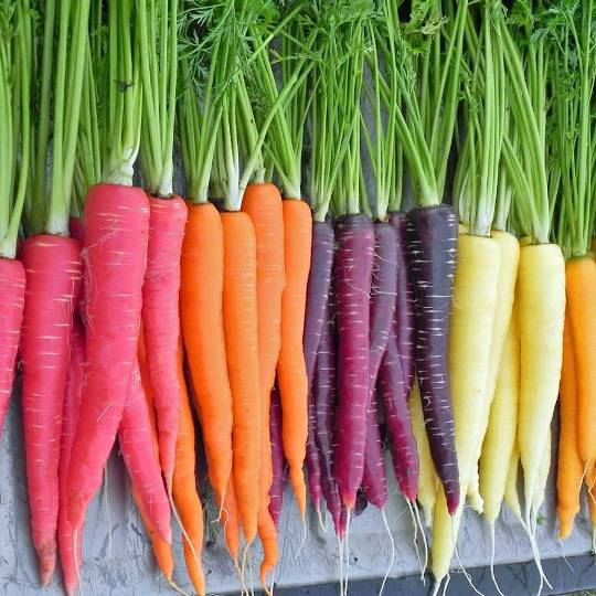 carrot-colour-mix-1