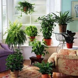 И най-широко разпространените стайни растения крият сериозна опасност