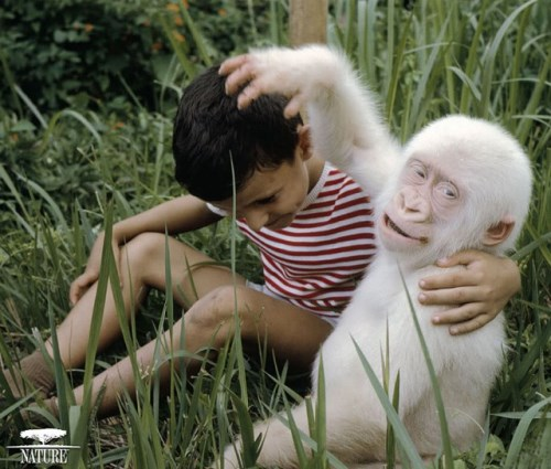 Маймуна албинос