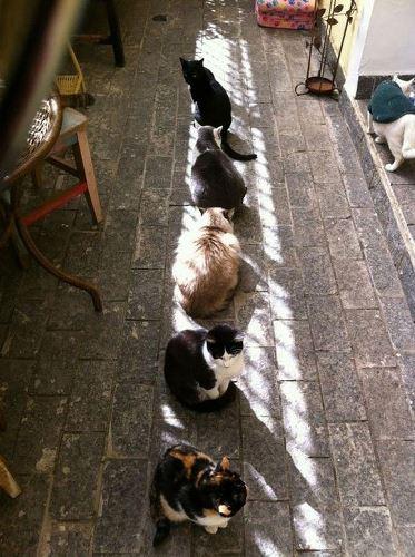 animals sun (1)