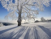 Winter+1