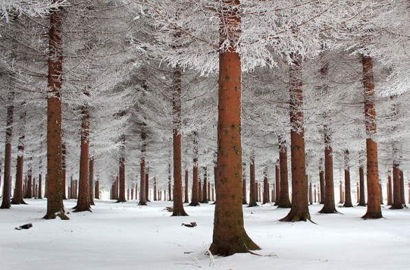 Winter+5