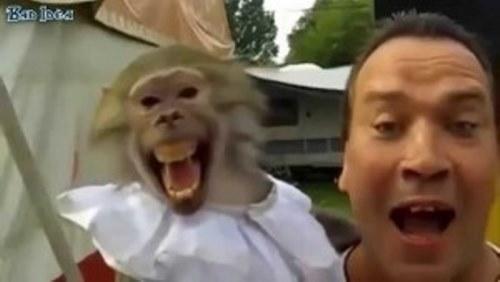 Маймуна се хили