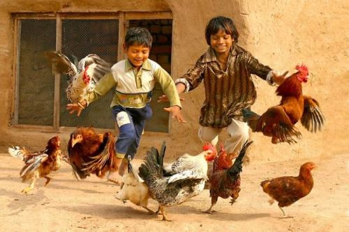 Преследване на пилета