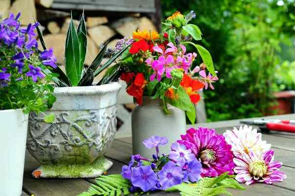 lovely-flowers1
