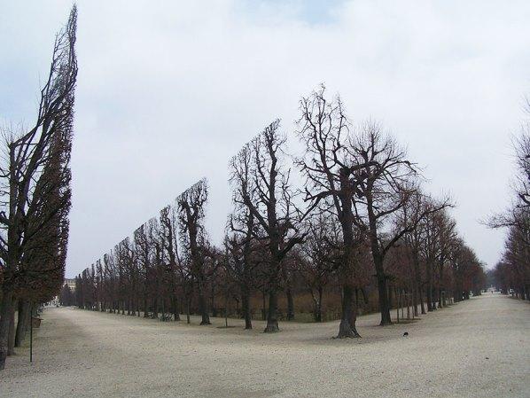 Дървета в парк Шенбрун