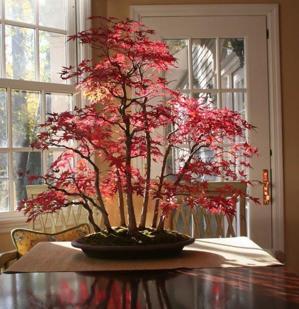 bonsai-trees-15