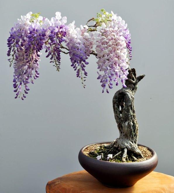 bonsai-trees-21