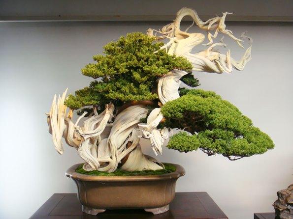 bonsai-trees-22