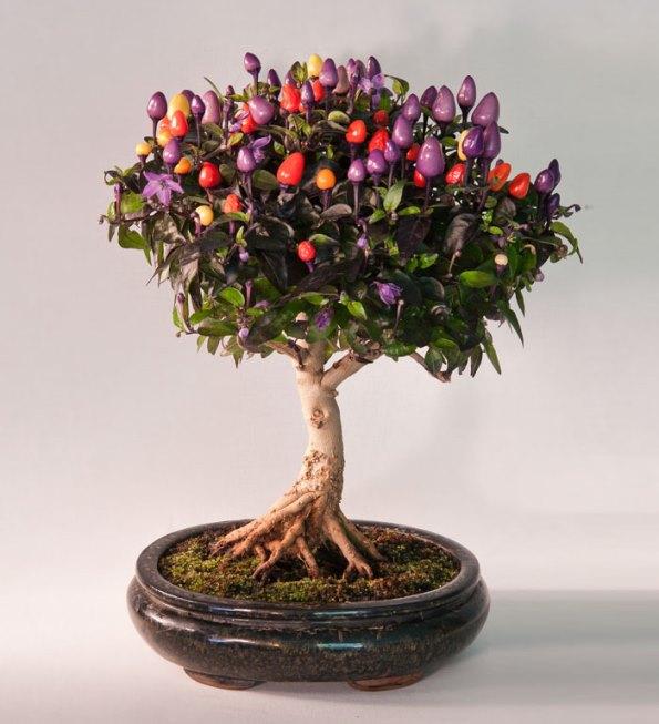 bonsai-trees-25