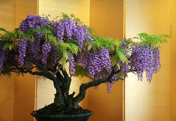 bonsai-trees-30
