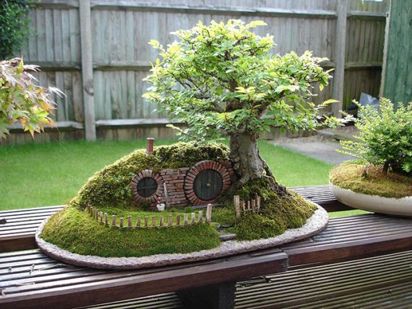 bonsai-trees-31