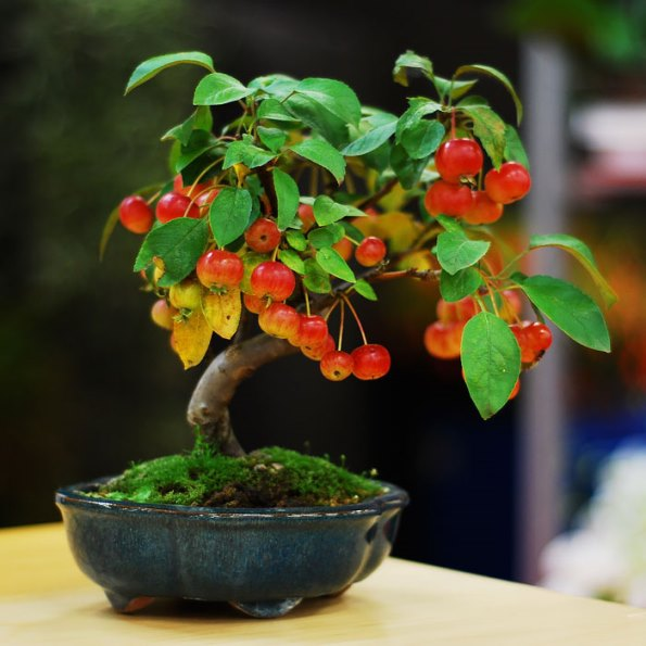 bonsai-trees-51