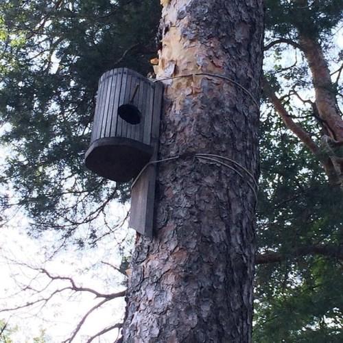 Сковава хранилка за птички от кутията за хляба