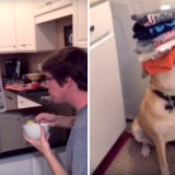 When You Need a Helping Hand. Dog helps owner with day to day tasks.