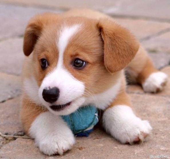 Кученце