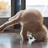 animals-yoga9