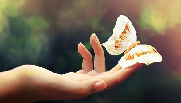 Пеперуда - бяла със златна окраска
