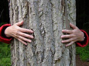 дърветата