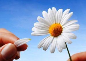 гадания цветя