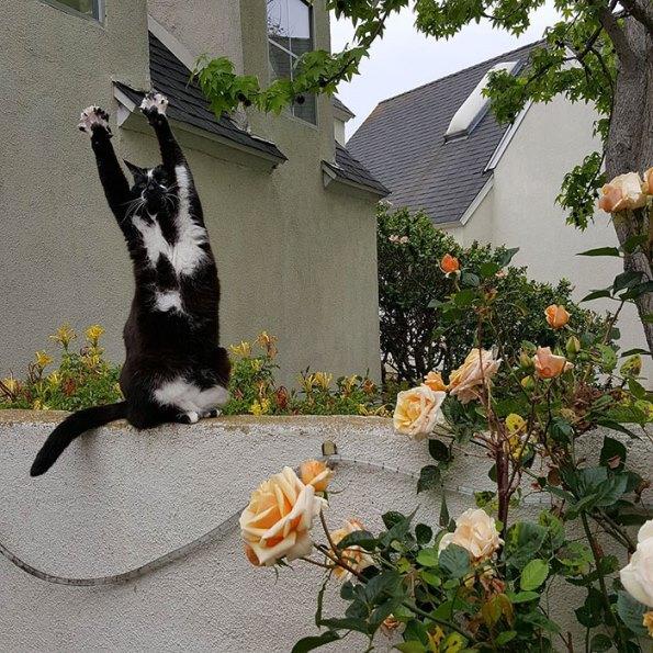 goal-kitty-10
