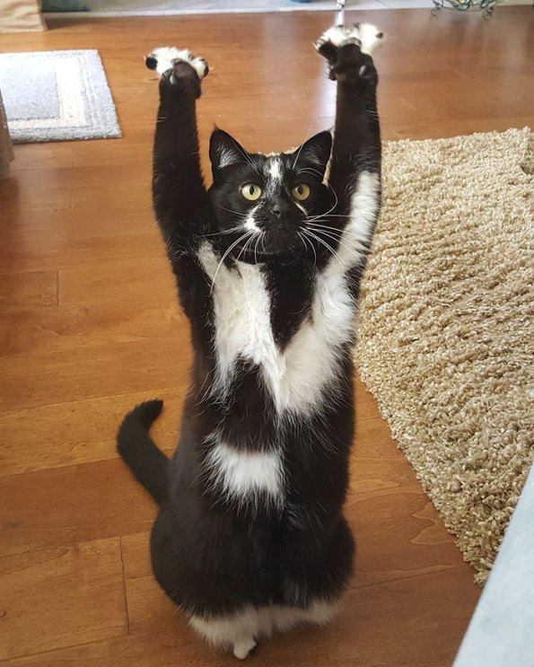 goal-kitty-23