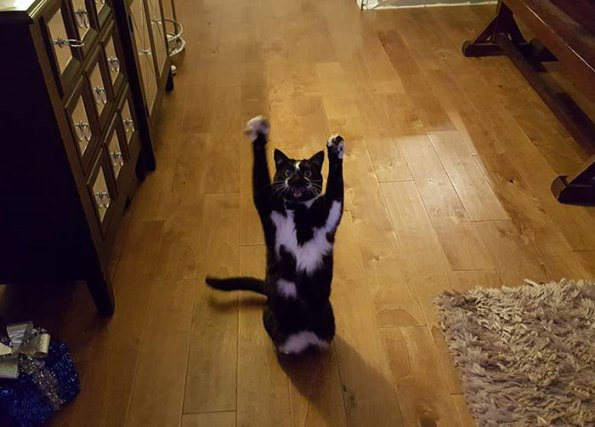 goal-kitty-26