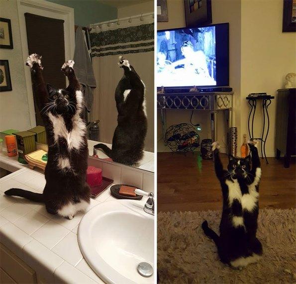 goal-kitty-27