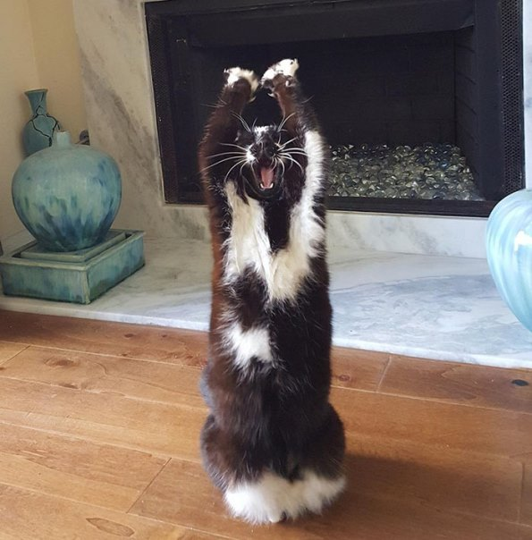 goal-kitty-3