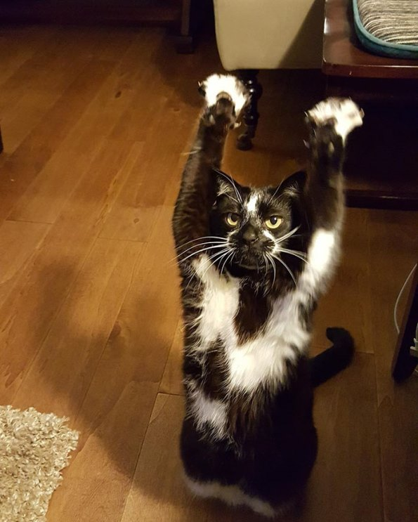 goal-kitty-4
