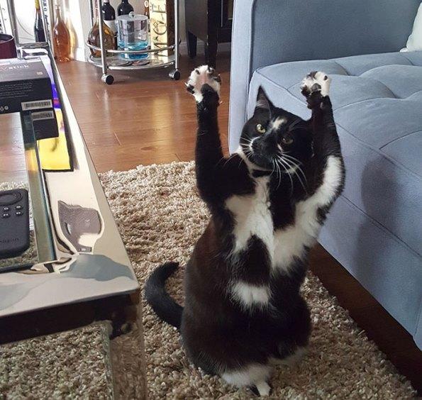 goal-kitty-5
