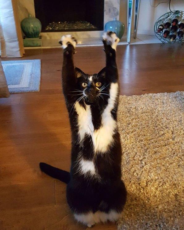 goal-kitty-7