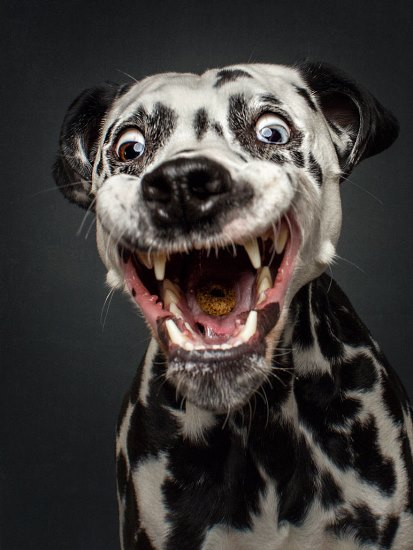 dogs-catching-treats-fotos-frei-schnauze-christian-vieler-10-57e8d09c77d18__880