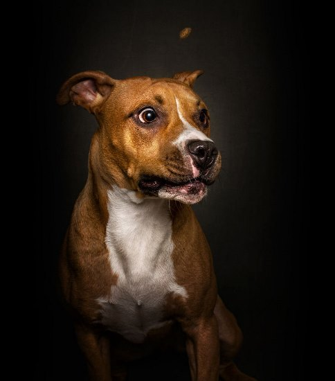 dogs-catching-treats-fotos-frei-schnauze-christian-vieler-16-57e8d0a847321__880