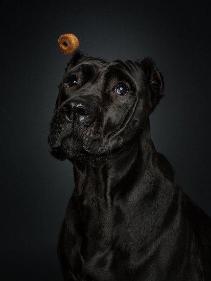 dogs-catching-treats-fotos-frei-schnauze-christian-vieler-18-57e8d0ac21a4e__880