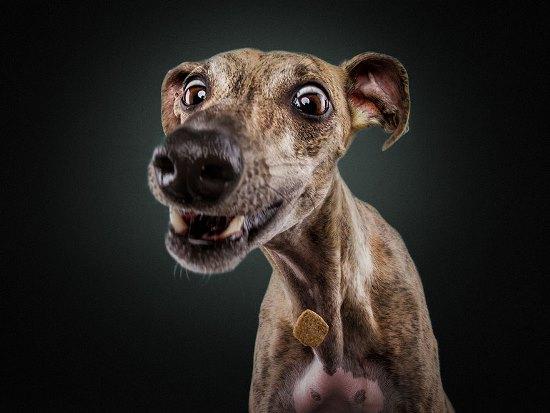 dogs-catching-treats-fotos-frei-schnauze-christian-vieler-2-57e8d08a69cf2__880