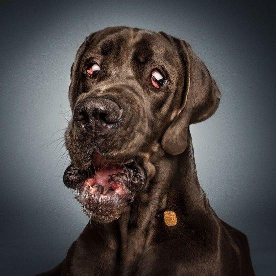 dogs-catching-treats-fotos-frei-schnauze-christian-vieler-21-57e8d0b21ce4c__880