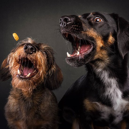 dogs-catching-treats-fotos-frei-schnauze-christian-vieler-24-57e8d0b7ad9cf__880
