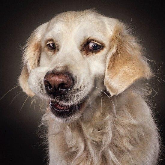 dogs-catching-treats-fotos-frei-schnauze-christian-vieler-28-57e8d0bff2d50__880