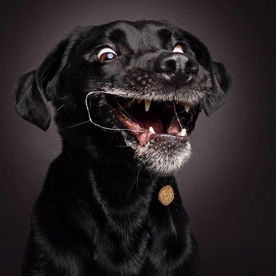 dogs-catching-treats-fotos-frei-schnauze-christian-vieler-35-57e8d0cf0c089__880