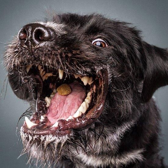 dogs-catching-treats-fotos-frei-schnauze-christian-vieler-36-57e8d0d1ed16a__880