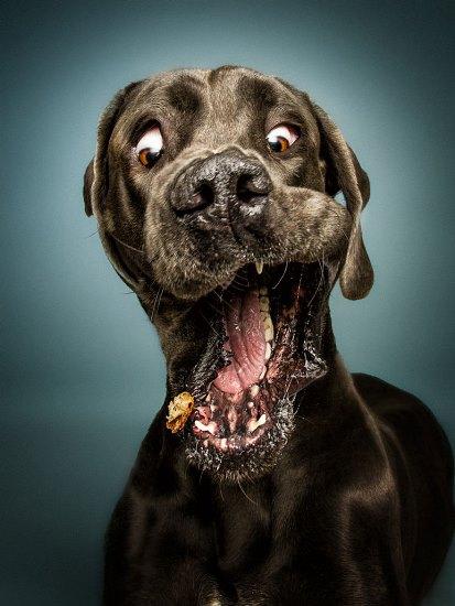 dogs-catching-treats-fotos-frei-schnauze-christian-vieler-4-57e8d08f5fc8f__880