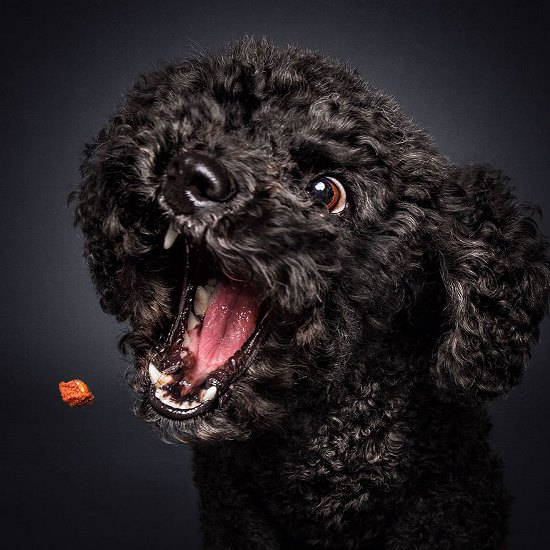 dogs-catching-treats-fotos-frei-schnauze-christian-vieler-41-57e8d0dc9105a__880