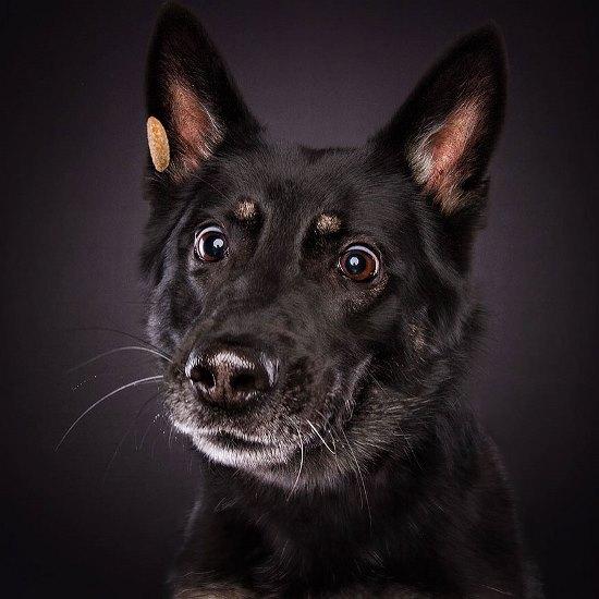 dogs-catching-treats-fotos-frei-schnauze-christian-vieler-51-57e8d0f17b8d8__880
