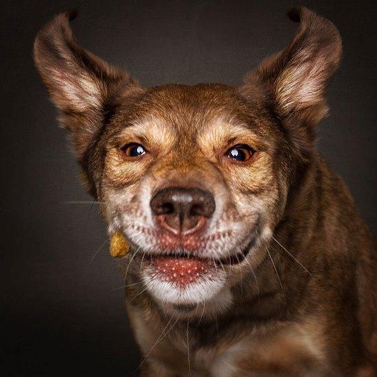 dogs-catching-treats-fotos-frei-schnauze-christian-vieler-52-57e8d0f3825f5__880