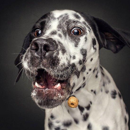 dogs-catching-treats-fotos-frei-schnauze-christian-vieler-55-57e8d0f974744__880