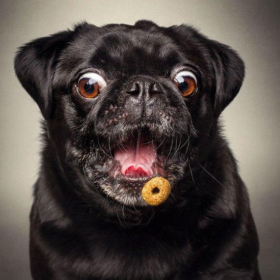 dogs-catching-treats-fotos-frei-schnauze-christian-vieler-63-57e8d109618b6__880